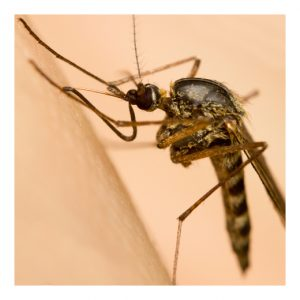 prevent mosquitoes